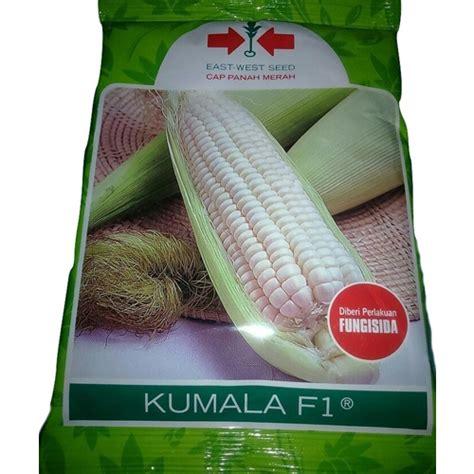 Bibit Jagung Murah jual benih jagung pulut kumala f1 1750 biji murah