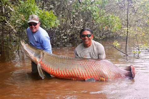 water fish largest fresh water fish in the world
