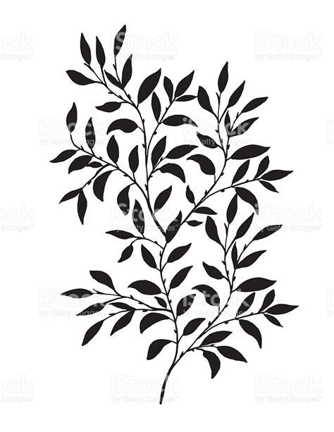 drawn leaves vine pencil and in color drawn leaves vine