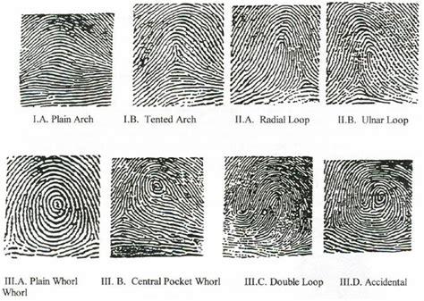 pattern types in fingerprint identification trials tribulations stephanie lazarus trial day 15