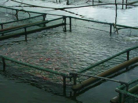 sle business plan on fish farming buy a fish farm for rent or for sale businessforsale com