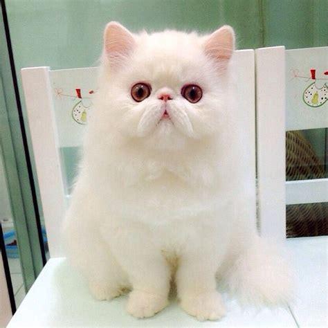 Gambar Foto Kucing Lucu gambar foto kucing lucu imut gambar kata kata