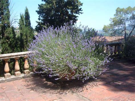 quali piante mettere in giardino la finestra di stefania quali sono i fiori pi 249 adatti da