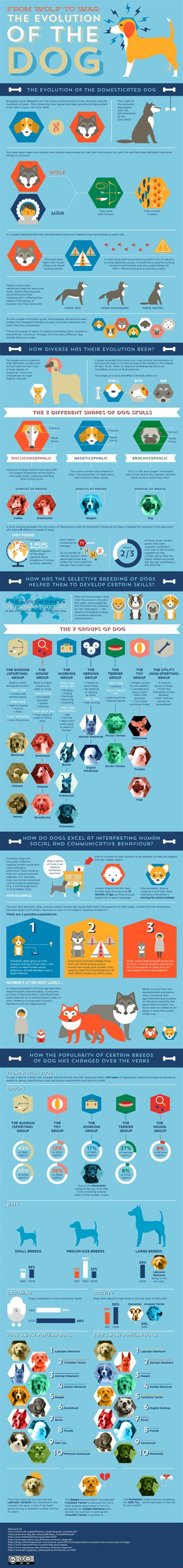 the evolution of dogs 20 informative infographics on evolution infographics graphs net