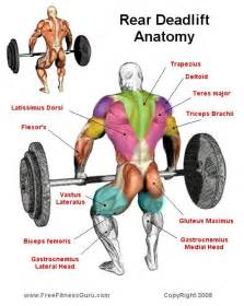 T Bar Row Bench What Muscles Do Deadlifts Work Discover The Information