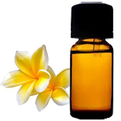 pengambilan minyak dari bunga kamboja lifuilim s