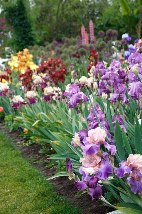 Iris Flower Garden Bearded Iris Garden Garden