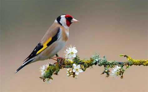 bird on flower branch 2560x1600 6606 hd wallpaper res
