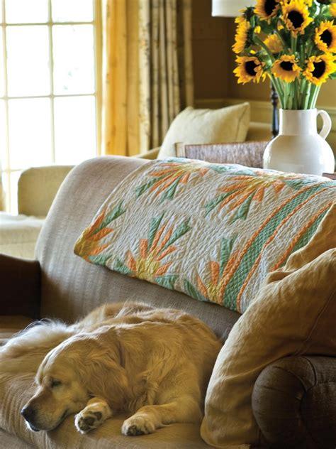 dog friendly sofa search viewer hgtv