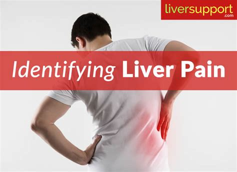 Liver Detox Side Effects Headache by Identifying Liver Liversupport