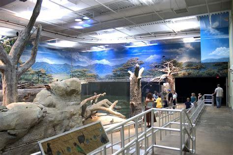 aquarium wall mural adventure aquarium googleplex murals