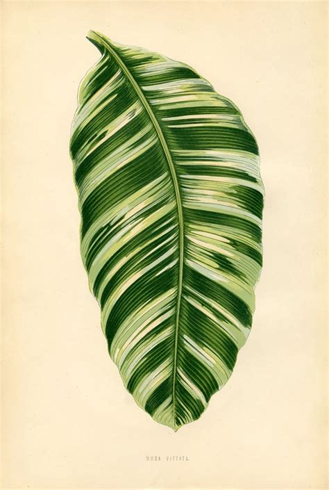 vintage printable gorgeous leaf botanical graphics