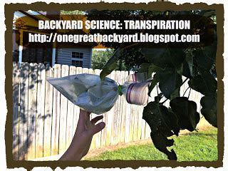 backyard science experiments list one great backyard get outside and play 9 backyard