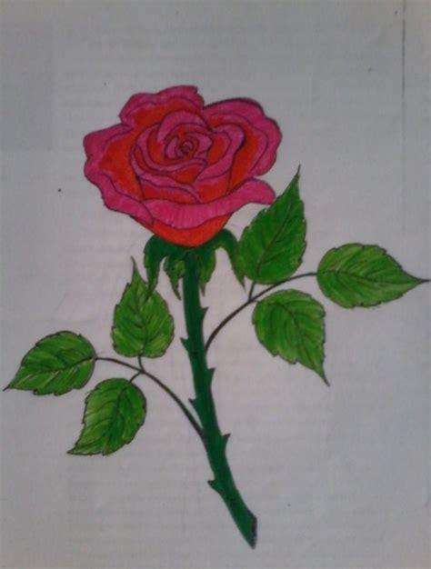 contoh sketsa gambar bunga indah  mudah ditiru