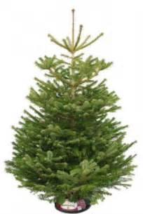 best artificial tree uk tree shopping where and what to buy best real