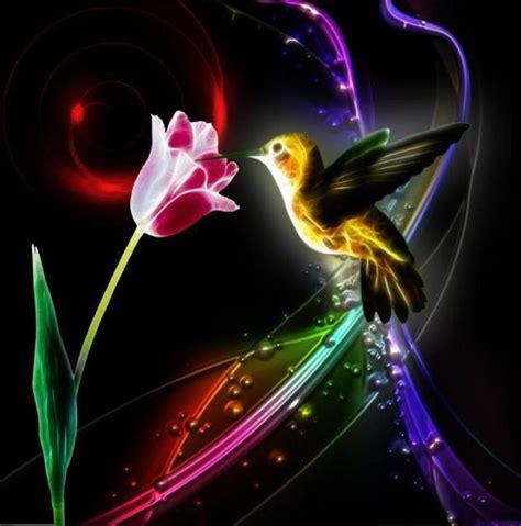 imagenes en movimiento espectaculares el colibr 237 es un mensajero de amor armonia del alma