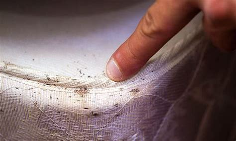 itchy in bed natural remedies to get rid of bed bugs easily and