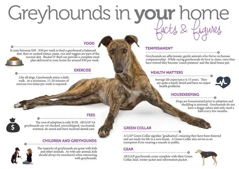 greyhound puppies for adoption lincoln kennels and cattery