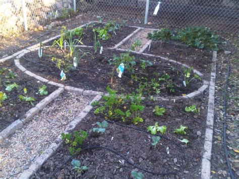 Winter Vegetable Garden California The Of A La Gardener Winter Vegetable Garden
