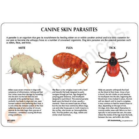 worms in dogs skin parasites in dogs skin www pixshark images galleries with a bite