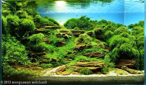 Aquascape Waterfall by 2013 Aga Aquascaping Contest 170