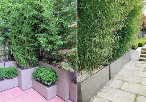 bambus als sichtschutz im kübel bambus im k 252 bel als sichtschutz und deko auf der terrasse
