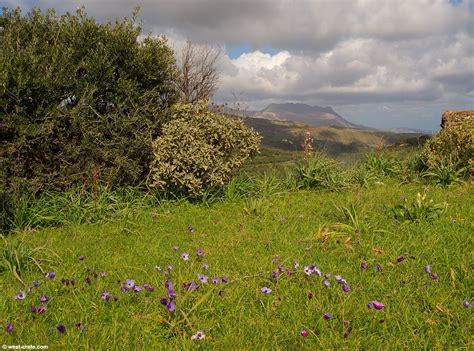 spring landscaping early spring landscape