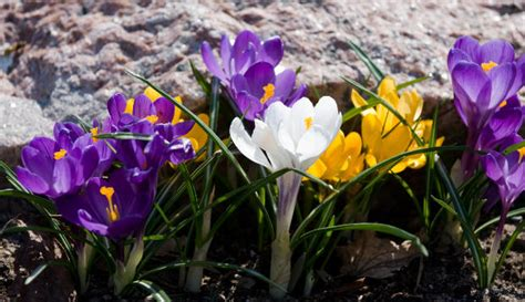 tips on how to force flower bulbs to bloom interior