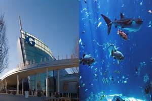 Bill Gates Living Room Whale by Enjoy 2012 At Attractive Aquarium Senthilkumarsekar