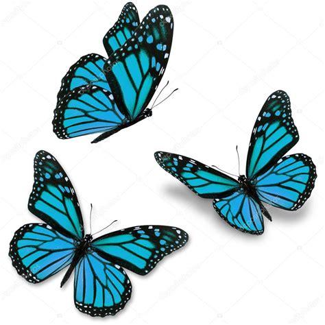 imagenes jpg mariposas mariposa azul foto de stock 64978267 depositphotos