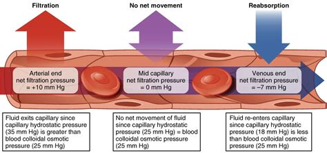 capillary bed definition difference between osmotic pressure and oncotic pressure osmotic pressure vs oncotic
