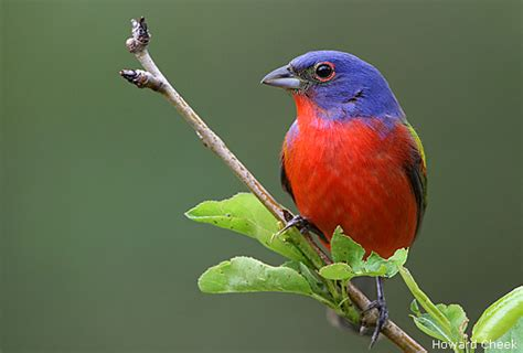 pictures of birds in the hill country of texas photo gallery backyard bird images