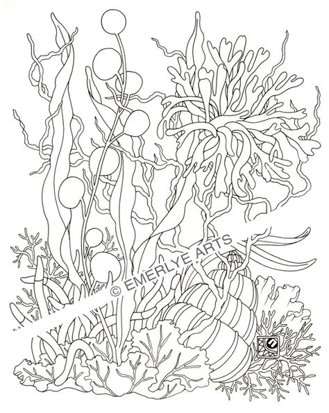 coral and seaweed coloring pages coloring pages