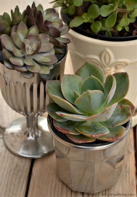 diy succulent planter diy mercury glass succulent planters a night owl blog