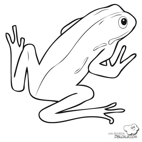imagenes animales vertebrados para colorear anfibios rana dibujalia dibujos para colorear