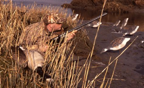 layout hunting tips 5 proven duck hunting strategies game fish