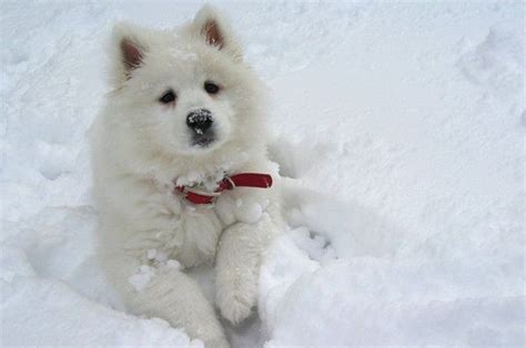 snow puppies loving the snow dogs photo 13052100 fanpop