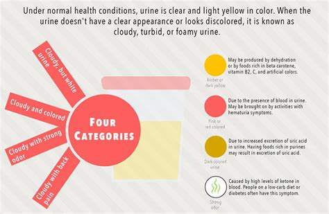 Foamy Urine During Detox by Foamy Urine Causes And Remedies