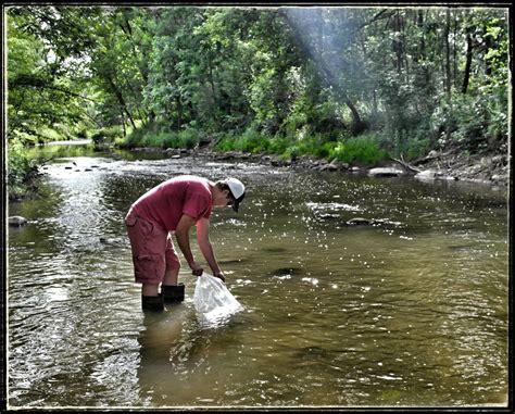 thames river anglers thames river anglers association