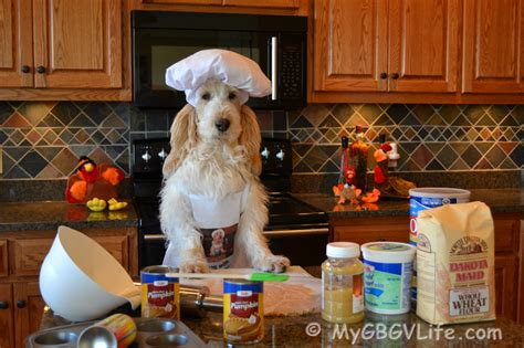 can you give dogs turkey thanksgiving dessert for the gbgv my gbgv