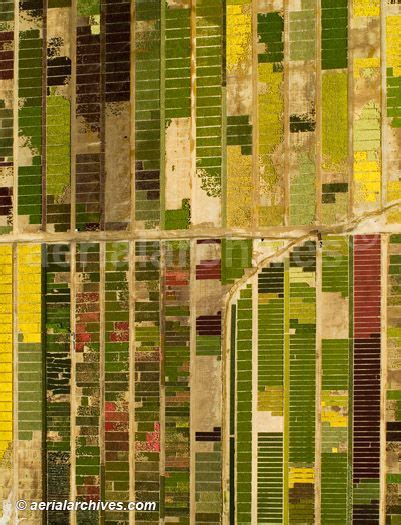 pattern of agriculture and types of forest in bangladesh 184 best aerial photos and satellite images images on