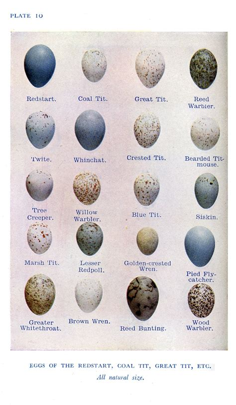 Egg Collection 43 Best Images About Collections Bird S Eggs On