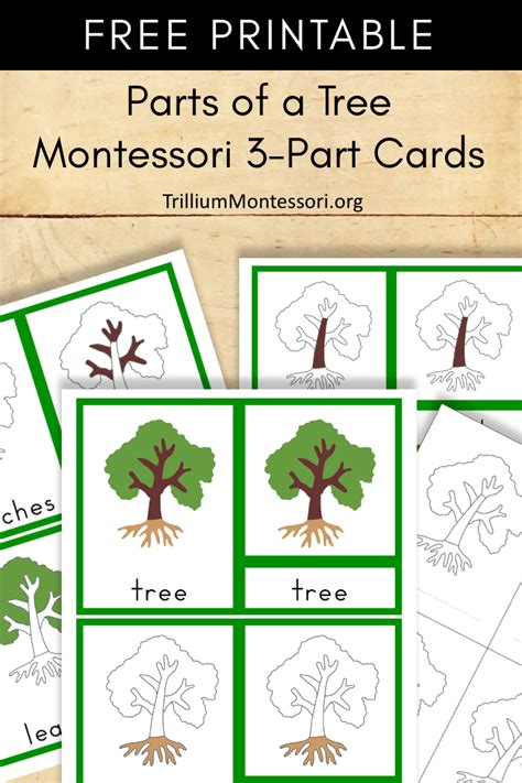 montessori three part card template free montessori printable parts of a tree trillium