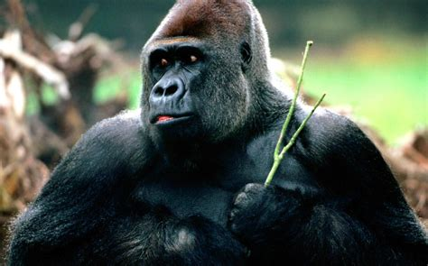 imagenes de animales fuertes los animales m 225 s fuertes del mundo