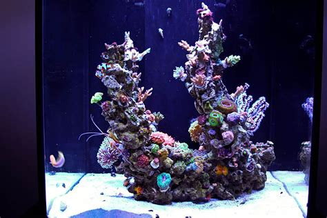 Saltwater Aquascape by Tips For Awesome Aquascapes Saltwater Aquarium Advice