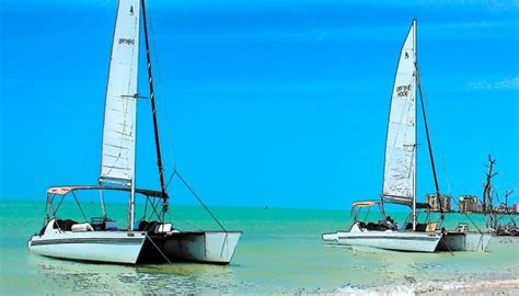 dolphin boat rental marco island sail marco island florida beaches for dolphins on our boat