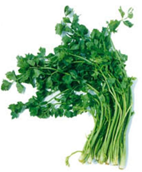 Teh Herbal Seledri the miracle from herbal usefulness celery