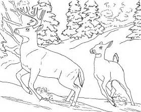 realistic animal coloring pages free printable animals
