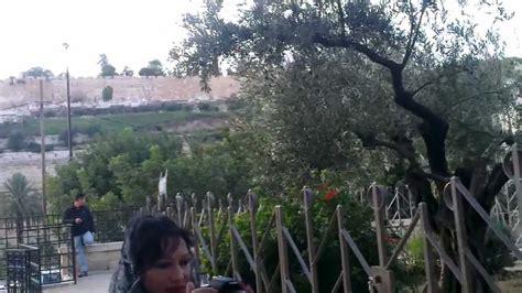 garden  gethsemaneghetsimani mount  olives