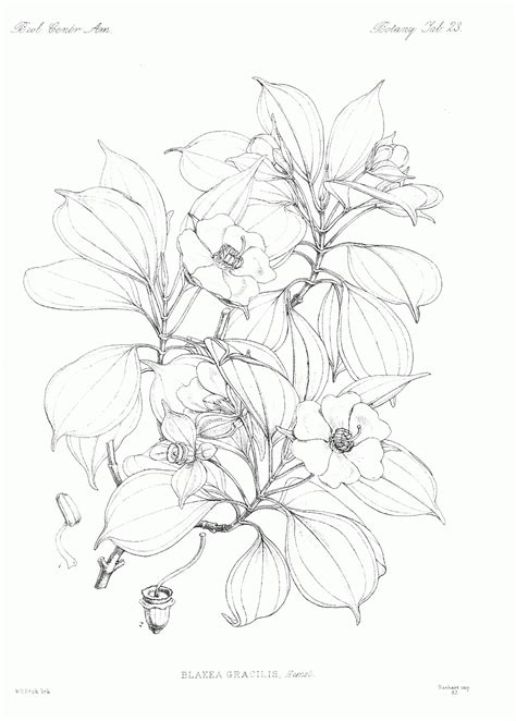 pages of botany coloring pages coloring home